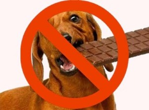 dogs-should-not-eat-chocolates