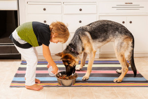 feeding-your-pet-dog